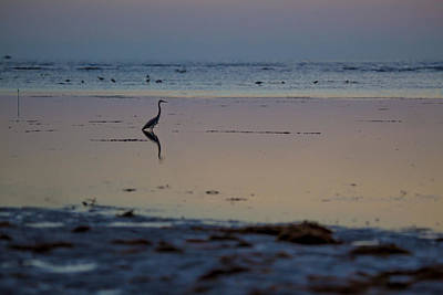 Heron Photograph - Close Of The Day by J Darrell Hutto