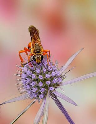 Digital Art - Close Up Bee On Flower by Rusty R Smith