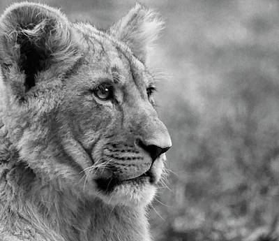 Photograph - Close Up Cub Black And White by Steve McKinzie