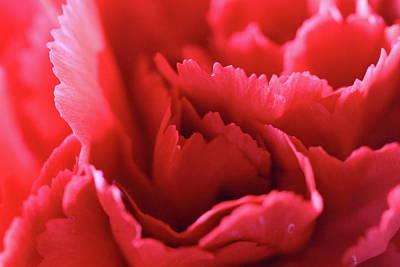 Photograph - Close Up Flower Petals by Angela Murdock