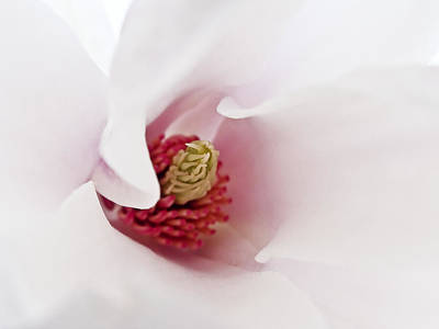 Photograph - Abstract White Red Pink Flowers Macro Photography Art  by Artecco Fine Art Photography