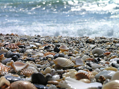 Abundance Photograph - Close Up From A Beach by Romeo Reidl