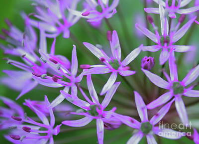 Photograph - Close Up Globus Flower by Erick Schmidt
