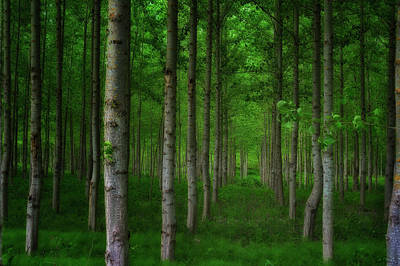 Photograph - Close Up Of A Forest Of Agricultural Trees by Dee Browning