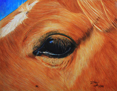 Painting - Close Up Of A Horse by Don MacCarthy