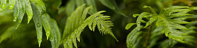Close-up Of A Raindrops On Fern Leaves Art Print by Panoramic Images