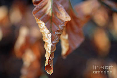 Close-up Of Autumn Leaf Art Print
