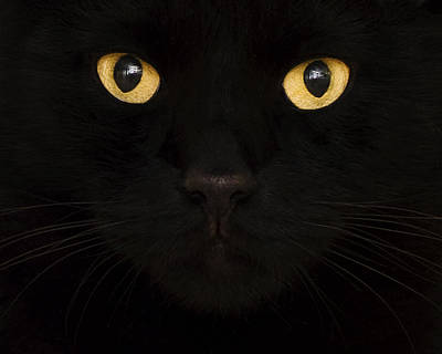 Close Up Of Cat Art Print by Jody Trappe Photography
