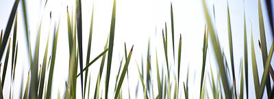 Close-up Of Cattail Grass Typha Art Print by Panoramic Images