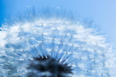 Fertility Photograph - Close-up Of Dandelion On Blue Sky by Michal Bednarek