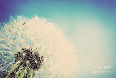 Fertility Photograph - Close-up Of Dandelion On Blue Vintage Sky by Michal Bednarek