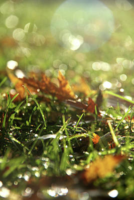 Photograph - Close-up Of Dry Leaves On Grass, In A Sunny, Humid Autumn Morning by Emanuel Tanjala
