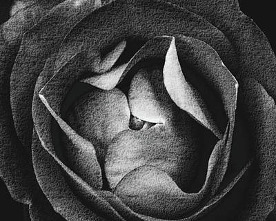 Photograph - Close Up Of Flower Top View Fine Art by Jacek Wojnarowski