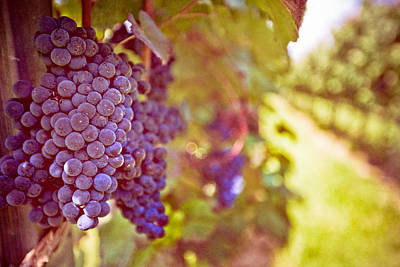 Purple Grapes Photograph - Close Up Of Grapes by Boston Thek Imagery