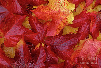 Photograph - Close-up Of Leaf Patterns  by Jim Corwin