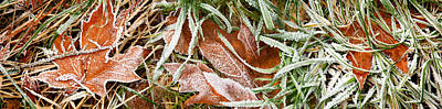 Fallen Leaf Photograph - Close-up Of Maple Leaves Covered by Panoramic Images