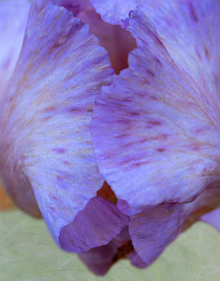 Photograph - Close Up Of Purple Iris Flower Petals by Barbara Rogers Nature Inspired Art Photography