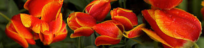 Close-up Of Raindrops On Red Flowers Art Print by Panoramic Images