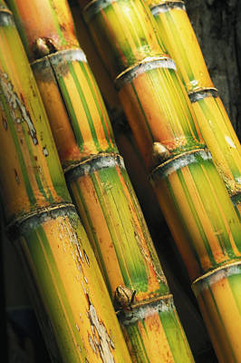 Photograph - Close-up Of Sugar Cane by Dana Edmunds - Printscapes