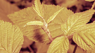 Photograph - Close Up Of Unopened Plant Leaf With Stalk A by Jacek Wojnarowski
