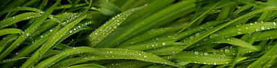 Close-up Of Wild Wet Grass Art Print by Panoramic Images