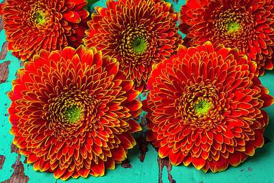 Gerbera Daisy Photograph - Close Up Orange Mums by Garry Gay