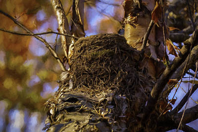 Photograph - Close Up Robins Nest by Jorge Perez - BlueBeardImagery