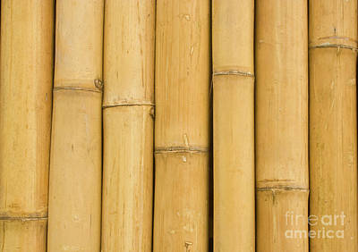Closed Up Bamboo Background Art Print