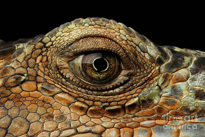 Reptiles Photograph - Closeup Eye Of Green Iguana, Looks Like A Dragon by Sergey Taran