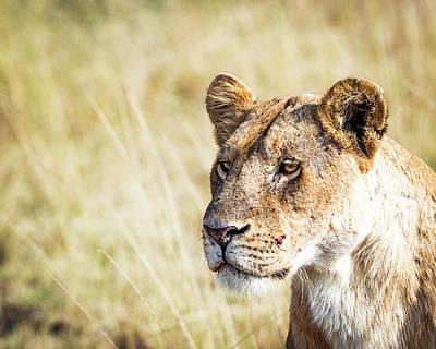 Featured Tapestry Designs - Closeup Lioness by Susan Schmitz