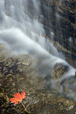 1 Object Photograph - Closeup Maple Leaf And Decew Falls, St by Darwin Wiggett