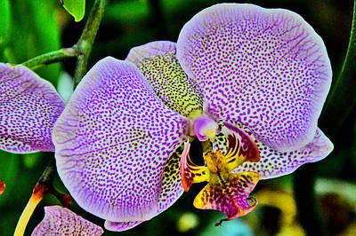 Closeup Of A Phalaenopsis Blossom Original by Andy Za