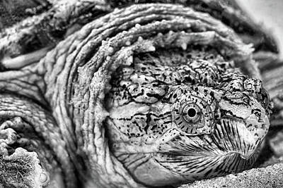Closeup Of A Snapping Turtle Art Print by JC Findley