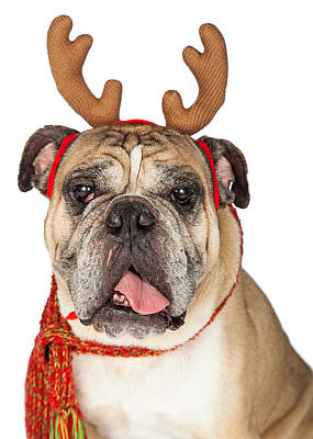 Animals Royalty-Free and Rights-Managed Images - Closeup Of Christmas Reindeer Dog by Susan Schmitz