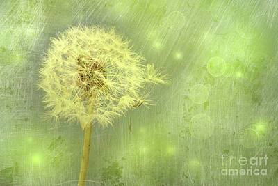 Closeup Of Dandelion With Seeds Art Print by Sandra Cunningham