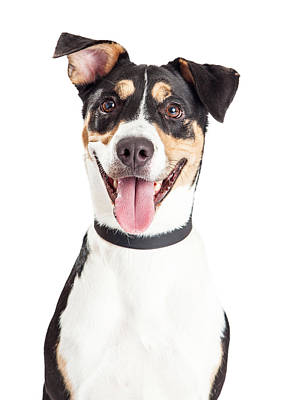 Closeup Of Happy Crossbreed Dog Mouth Open Print by Susan Schmitz