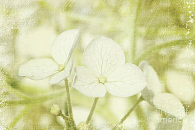 Closeup Of Hydrangea Flowers With Vintage Background Art Print by Sandra Cunningham