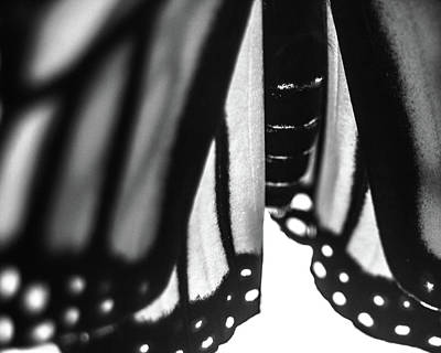 Photograph - Closeup Of Monarch Butterfly Hindwings by Jeanette Fellows