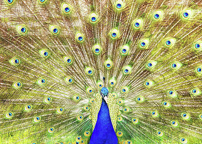Photograph - Closeup Of Peacock Displaying Train by Susan Schmitz