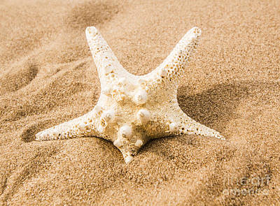 Photograph - Closeup On A Seashore Starfish by Jorgo Photography - Wall Art Gallery