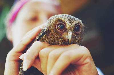 Closeup Portrait Of A Girl Holding And Tending A Small Baby Owl In Her Hands Art Print