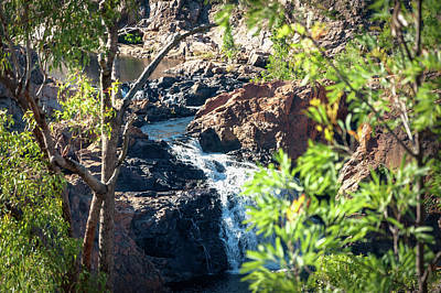 Photograph - Closeup View In Between The Trees At Edith Falls, Katherine, Australia. by Daniela Constantinescu