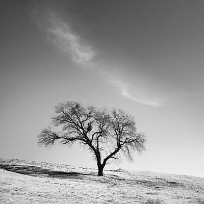 Photograph - Cloud Arc And Oak by Alexander Kunz