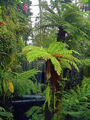 Photograph - Cloud Forest 10 by Ron Kandt