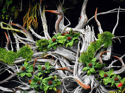 Photograph - Cloud Forest 18 by Ron Kandt