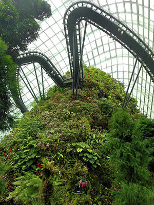 Photograph - Cloud Forest 6 by Ron Kandt