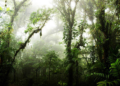 Forest Photograph - Cloud Forest by Nicklas Gustafsson