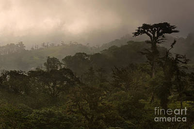 Cloud Forest Sunset Original by Matt Tilghman