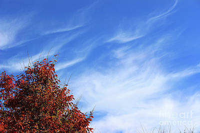 Photograph - Cloud Wisps by Karen Adams