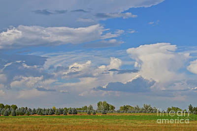 Clouds Aboive The Tree Farm Art Print